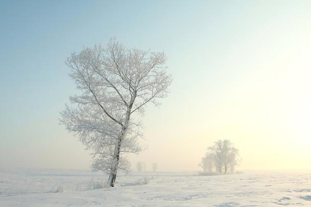 Mroźne zimowe drzewa na tle błękitnego nieba o świcie