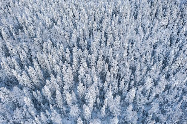 Mroźny las północny w śniegu widok z góry z drona, tekstura