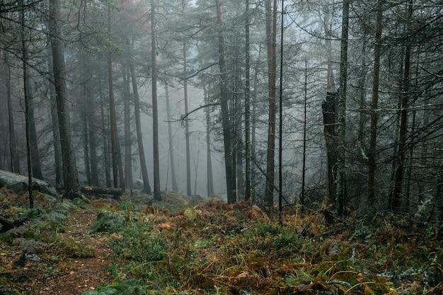 Mroźny poranek w ciemnym deszczowym lesie