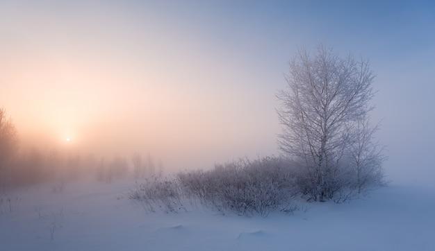 Mroźny zimowy poranek
