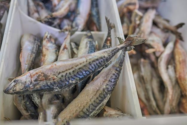 Mrożona makrela w lodówce w supermarkecie