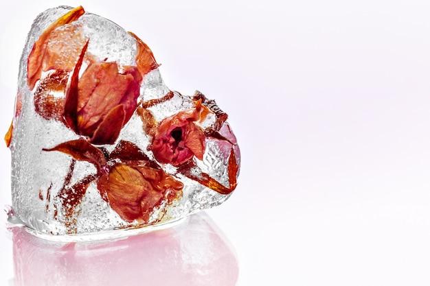 Mrożona róża w kostce lodu