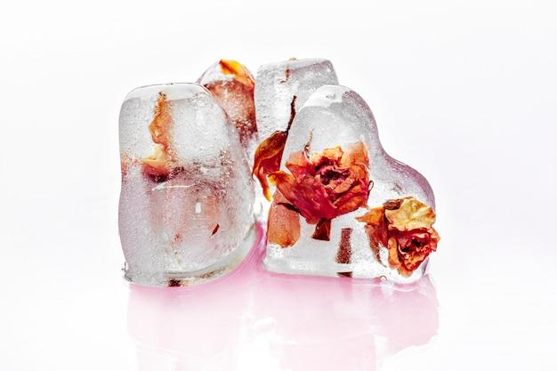 Mrożona róża w kostkach lodu