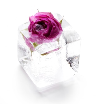 Mrożona róża