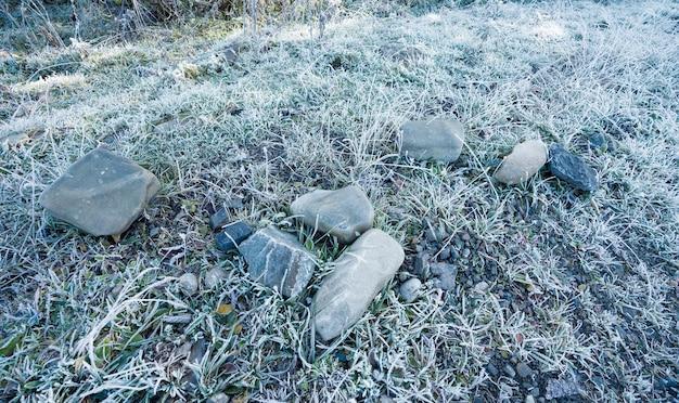 Mrożona trawa tło i tekstura w widoku poziomym