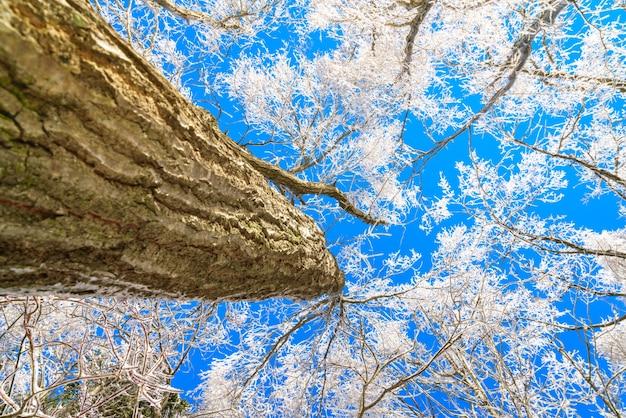 Mrożone drzewa zimą z nieba