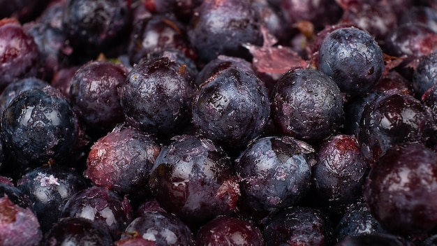 Mrożone winogrona w tle z bliska ciemnoniebieskie winogrona z lodówki