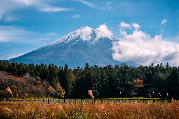Mt. fuji na niebieskiego nieba tle z jesieni ulistnieniem przy dniem w fujikawaguchiko, japonia.