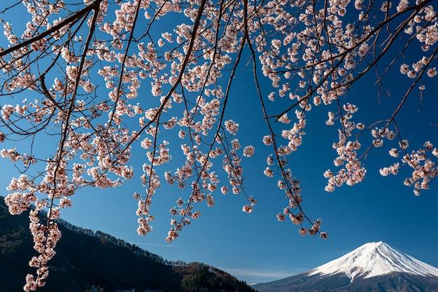 Mt. fuji na wiosnę z wiśniowymi kwiatami w kawaguchiko fujiyoshida, japonia.