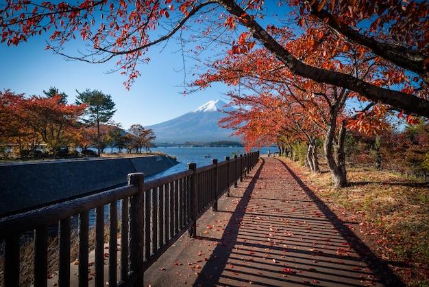 Mt. fuji nad jeziornym kawaguchiko z jesieni ulistnieniem przy dniem w fujikawaguchiko, japonia.