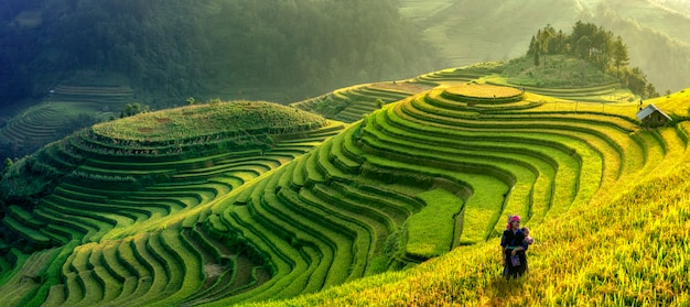 Mu cang chai, wietnam krajobrazowy ryżowy tarasowy pole blisko sapa. pola ryżowe mu cang chai rozciągające się po zboczu góry w wietnamie.