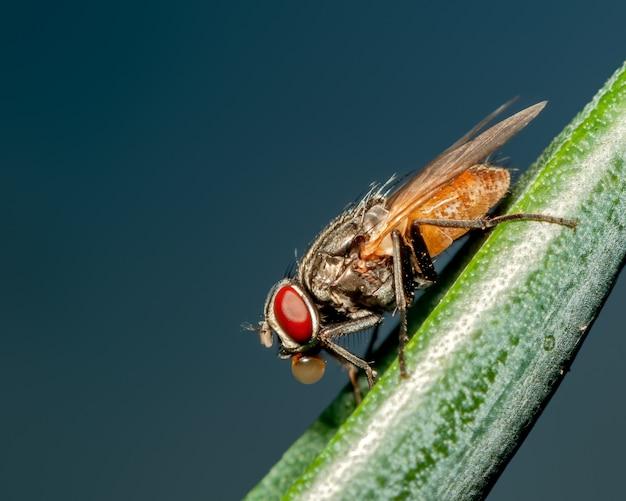 Mucha domowa siedzi na liściu, robiąc bańki po obiedzie