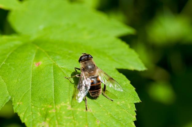 Mucha siedzi na zielonym liściu