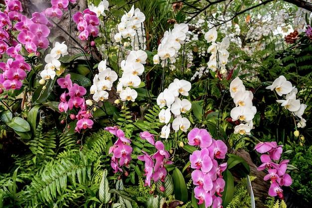 Multi orchid kwiat w wiosennej łące na tle ogrodu.