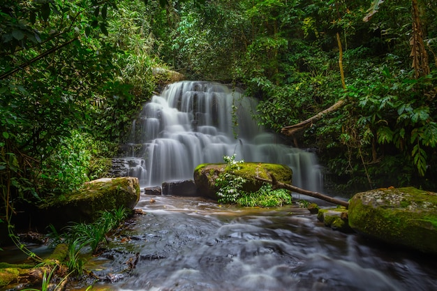 Mun dang wodospad z różowym kwiatem na pierwszym planie w rain forest