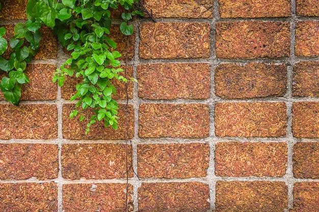 Mur z czerwonej cegły z pięknym bluszczem