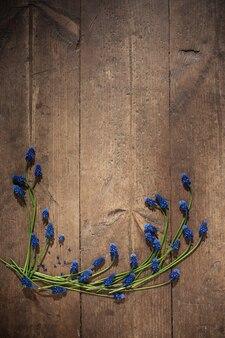 Muscari kwitnie na starym drewnianym tle