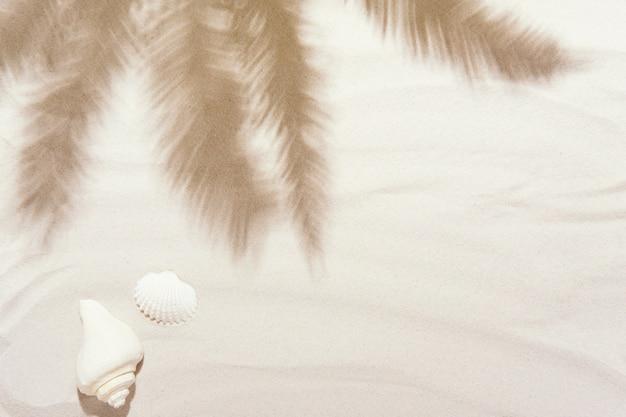 Muszelki z białym piaskiem i cieniami palmowymi. tropikalny tło