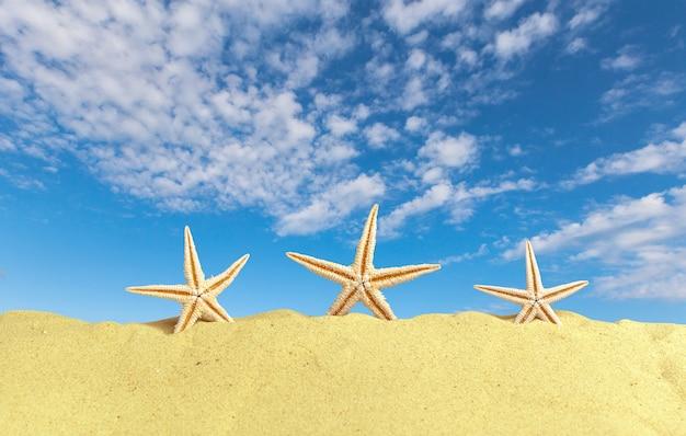 Muszelki z piaskiem jak. letnia plaża