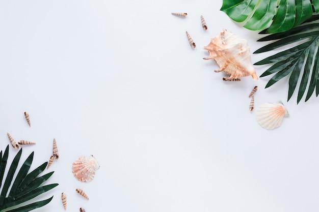 Muszelki z zielonymi liśćmi na stole