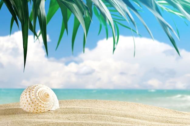Muszelki znajdują się na tle pięknego morskiego krajobrazu.