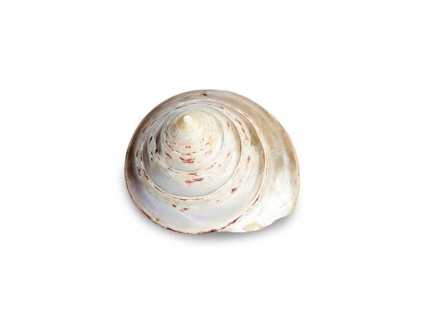 Muszla na białym tle na białej powierzchni. piękny naturalny kształt muszli.
