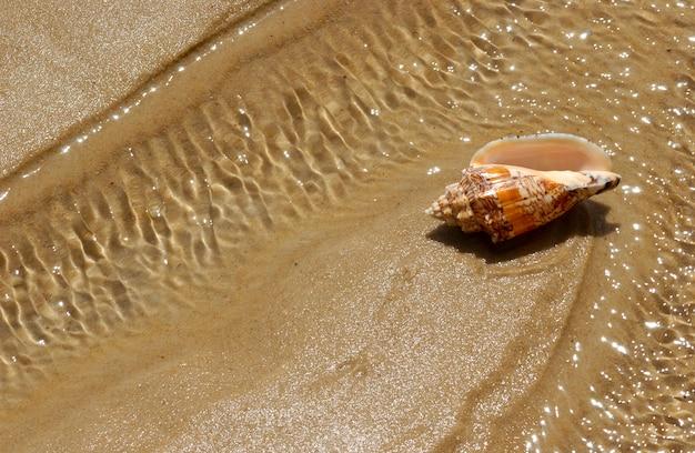 Muszla na piasku plaży jako tło.