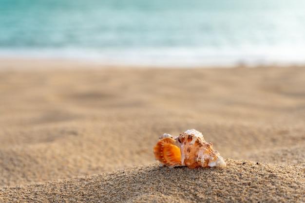 Muszla na plaży piasek z turkusowym morzem w tle selektywna ostrość miejsca kopiowania