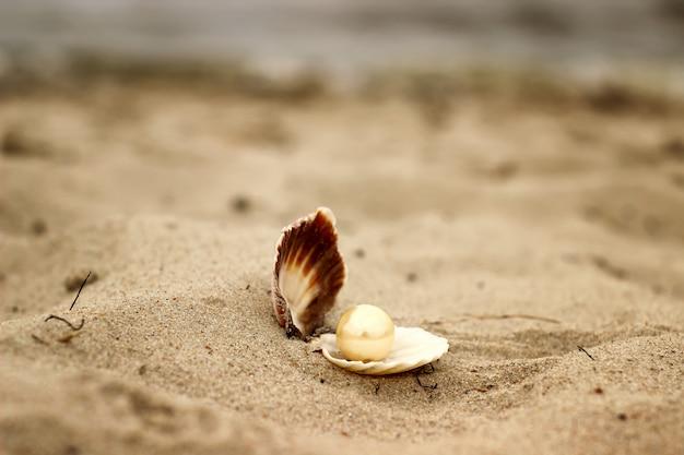 Muszla z perłą zbliżenie leżące na piaszczystej plaży i morza