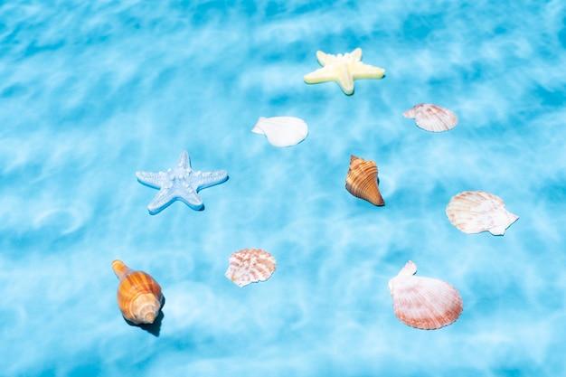 Muszle i muszle ślimaków i rozgwiazdy pod wodą