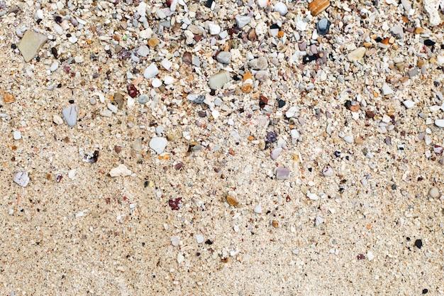 Muszle i piasek tło. kolorowe muszle. tekstura plaży