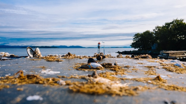 Muszle i skały w zatoce