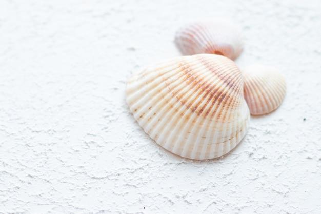 Muszle morskie leżą na białej powierzchni
