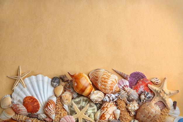 Muszle morskie na beżowej powierzchni