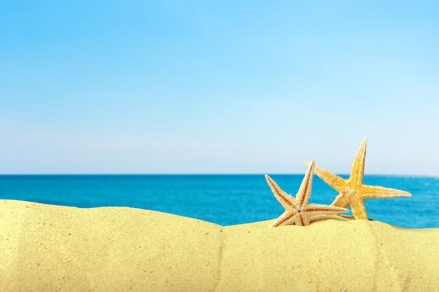 Muszle morskie na piasku