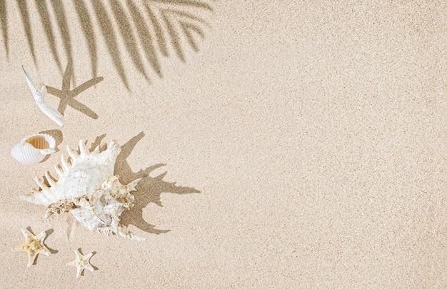 Muszle morza białego i gwiezdne ryby na cieniu piasku i palm. tropikalne tło