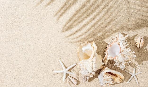 Muszle morza białego i rozgwiazdy na piasku z cieniami drzew palmowych. tropikalne tło, koncepcja lato, widok z góry