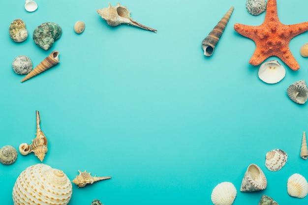 Muszle na niebieskim tle. odpoczynek, relaks, morze, ocean, koncepcja lato.