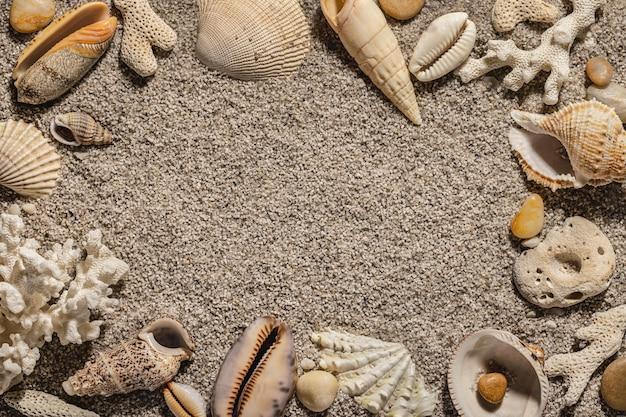 Muszle na piasku letnia przestrzeń kopii w tle
