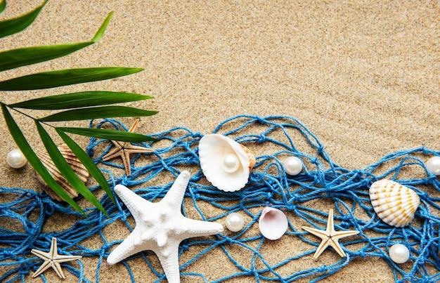 Muszle na piasku. morze letnie wakacje tło z miejscem na tekst. widok z góry