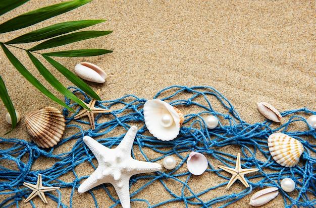 Muszle na piasku. powierzchnia wakacje morze z miejscem na tekst. widok z góry
