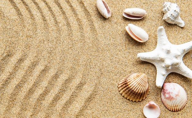 Muszle na piasku. tabela wakacji morze z miejscem na tekst. widok z góry