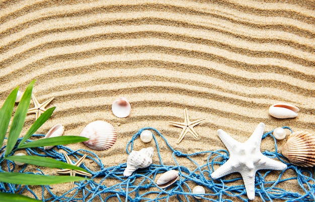 Muszle na piasku. wakacje nad morzem z miejscem na tekst. widok z góry