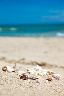 Muszle na piaszczystej plaży