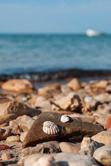 Muszle na zbliżenie kamień na tle morza śródziemnego w tunezji.