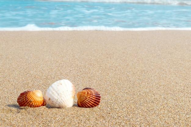 Muszle nad brzegiem morza w słoneczny letni dzień. tło z plaży i morza