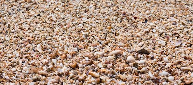 Muszle piękne skorupy na plaży na morzu jońskim, puglia, włochy