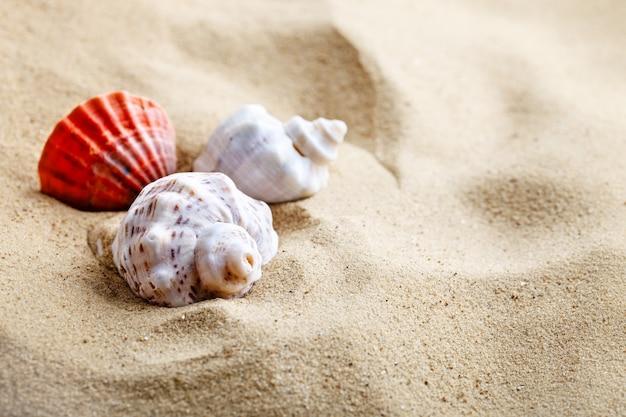 Muszli na plaży. letni odpoczynek.