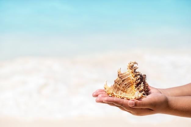 Muszli w dłoni dziecka na piaszczystej plaży w słoneczny dzień na tle błękitnego morza. koncepcja relaksu z miejscem na kopię