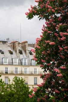 Muzeum luwru w paryżu, francja